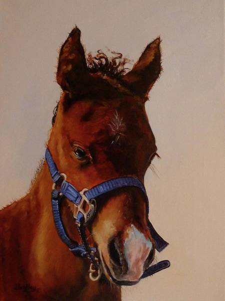 Painting - The Halter by Judy Bradley