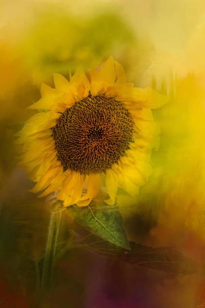 Photograph - The Happiest Flower by Jai Johnson