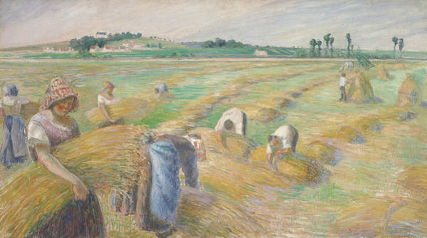 Painting - The Harvest by Camille Pissarro