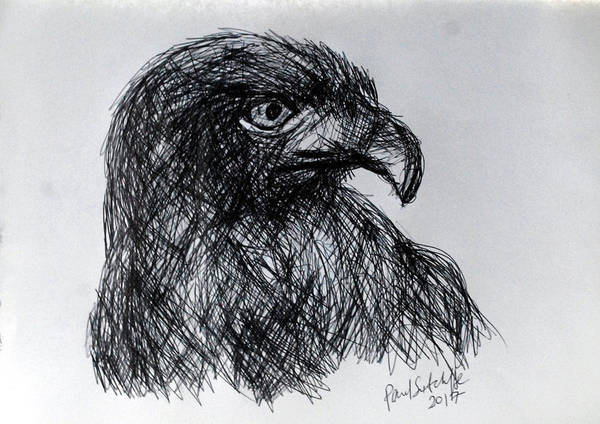 Drawing - The Hawk by Paul Sutcliffe