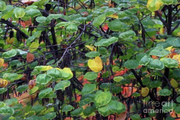 Photograph - The Heart Of A Redbud Tree by Karen Adams