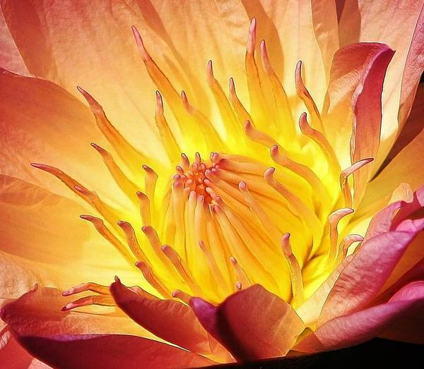 Botanica Photograph - The Heart Of A Water Lily by Bruce Bley