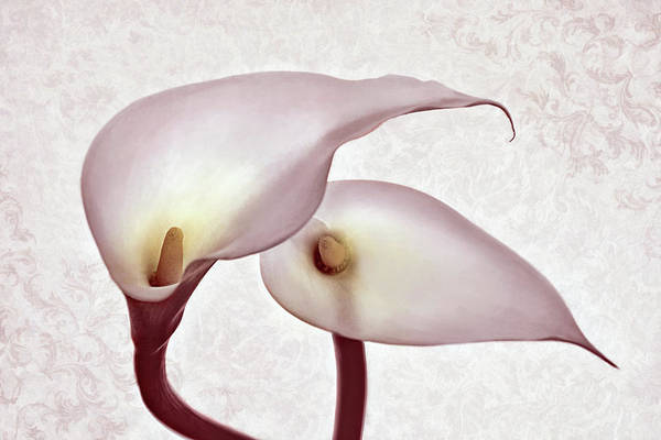 Photograph - The Heart Of Lilies by Leda Robertson