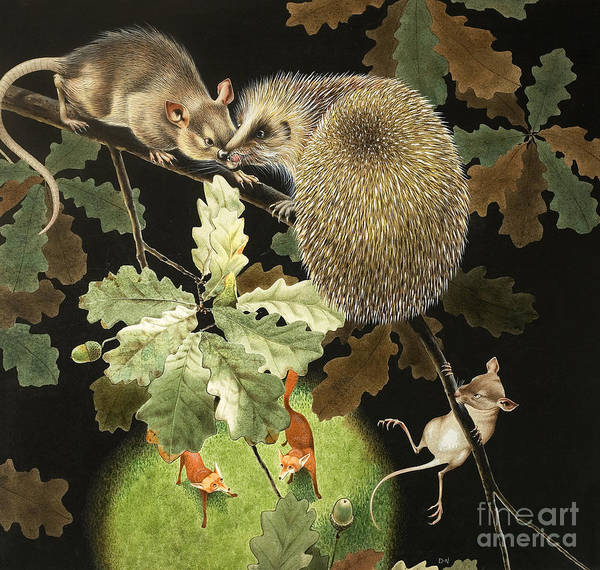Wall Art - Painting - The Hedgehog by David Nockels
