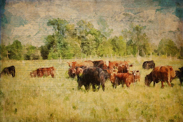 Photograph - The Herd by Christina VanGinkel
