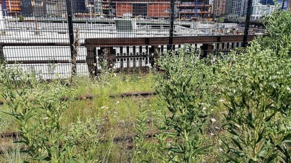 Deck Digital Art - The High Line 199 by Rob Hans