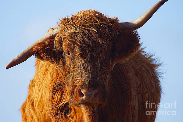 Glen Wall Art - Photograph - The Highland Cow by Smart Aviation