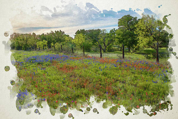 Photograph - The Hill Country's Prettiest Wildflowers In Watercolor by Lynn Bauer