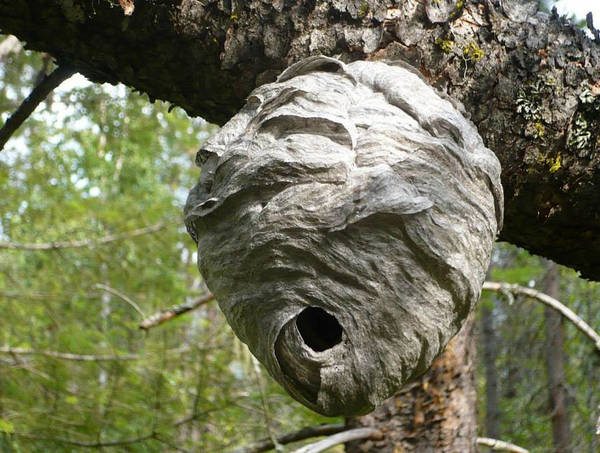 Photograph - The Hive by 'REA' Gallery