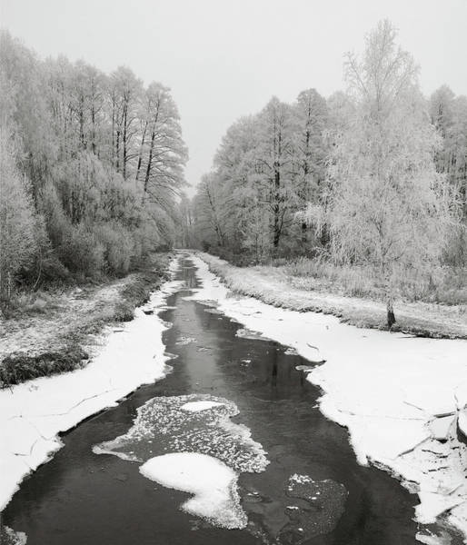 Photograph - The Hoarfrost. Kuchynivka, 2014. by Andriy Maykovskyi