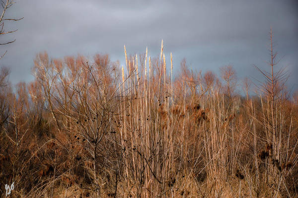 Photograph - The Hollows Landscape 1 by Gina O'Brien