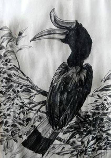 Hornbill Drawing - The Hornbill by Chaitawee Bubpa