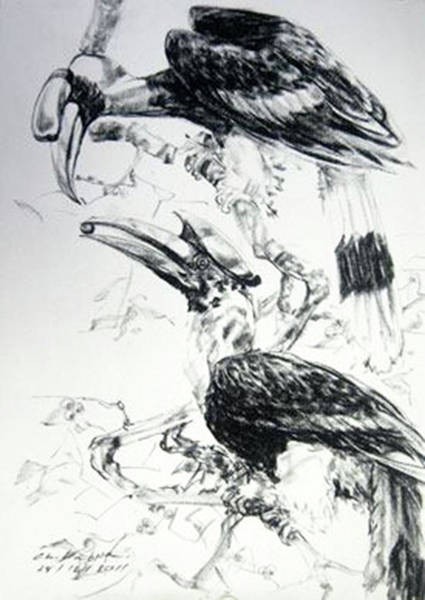 Hornbill Drawing - The Hornbills Are A Family  by Chaitawee Bubpa