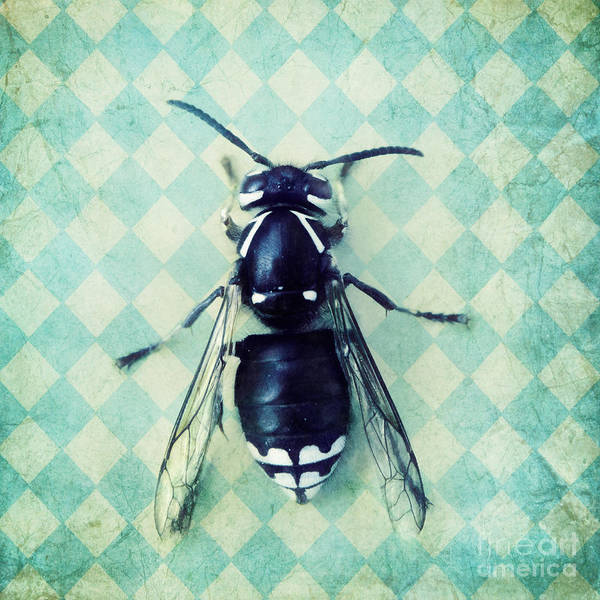 Wall Art - Photograph - The Hornet by Priska Wettstein
