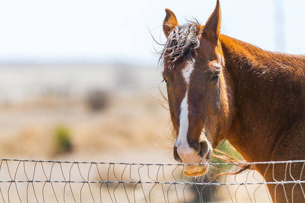 Photograph - The Horse In The Wind by SR Green