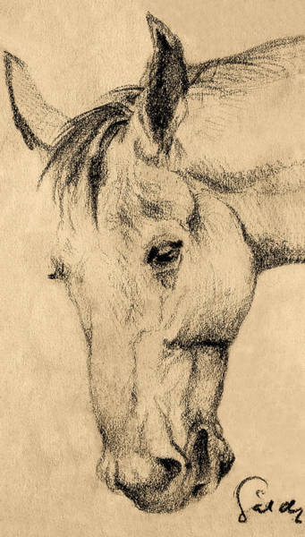 Wall Art - Drawing - The Horse Portrait by Odon Czintos