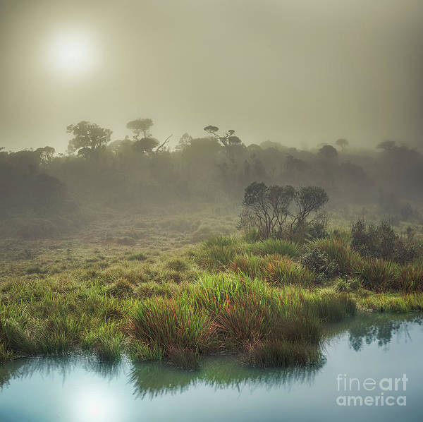 Srilanka Wall Art - Photograph - The Horton Plains. Sunrise by MotHaiBaPhoto Prints