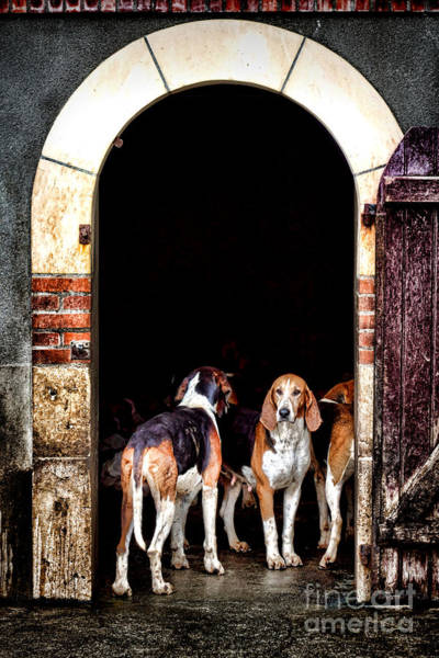 Photograph - The Hound by Olivier Le Queinec