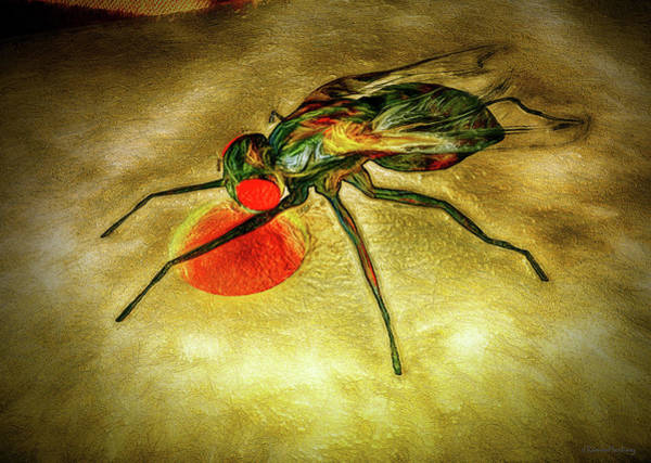 Wall Art - Digital Art - The House Fly by Ramon Martinez