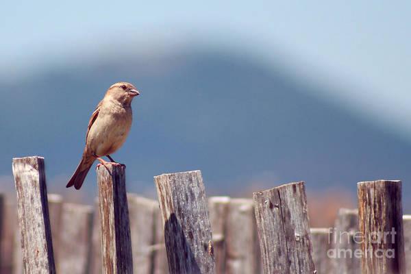 House Sparrow Photograph - The House Sparrow - Passer Domesticus by Svetlana Ledneva-Schukina