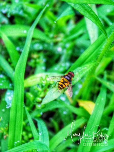 Photograph - The Hoverfly by MaryLee Parker