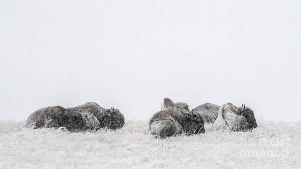 Photograph - The Huddled Masses by Jim Garrison