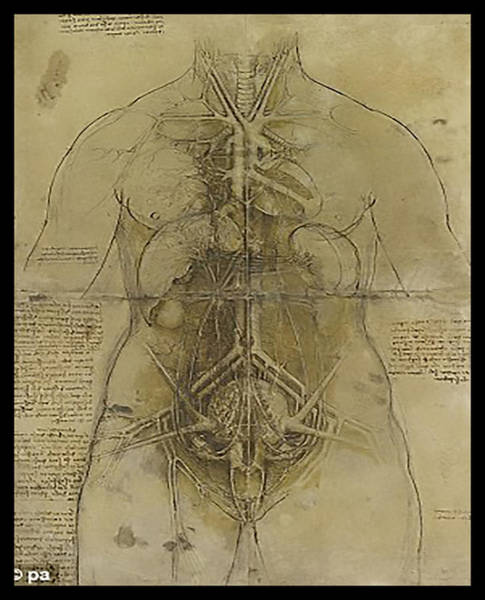 Wall Art - Painting - The Human Organ System by James Christopher Hill