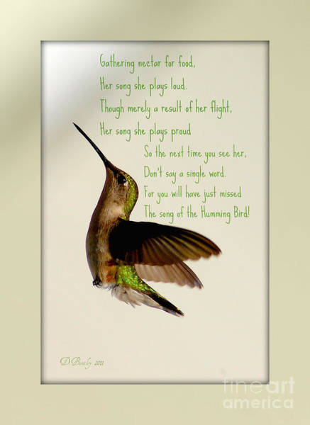 Photograph - The Hummingbird by Donna Bentley