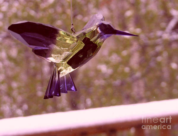 Photograph - the Hummingbird by Marianne NANA Betts