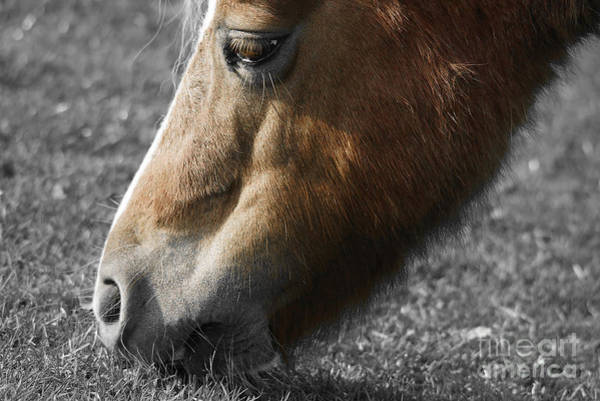 Eating Photograph - The Hungry Horse by Smart Aviation
