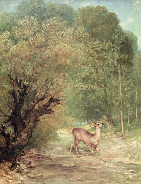 Wall Art - Painting - The Hunted Roe  by Gustave Courbet