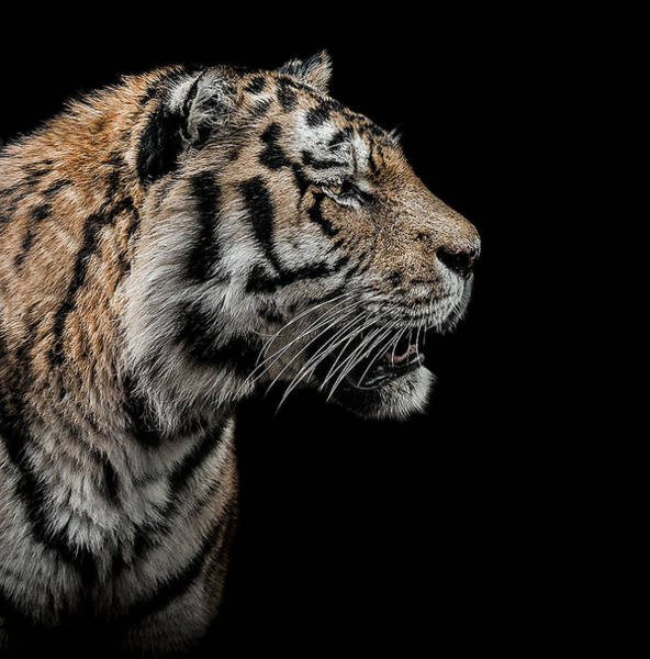 Endangered Photograph - The Hunter by Paul Neville