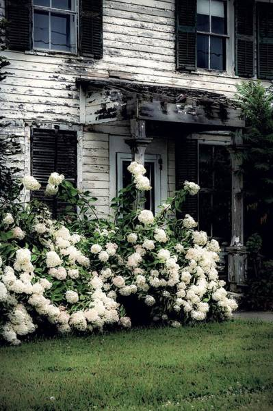 Photograph - The Hydrangeas Are In Bloom by Kendall McKernon