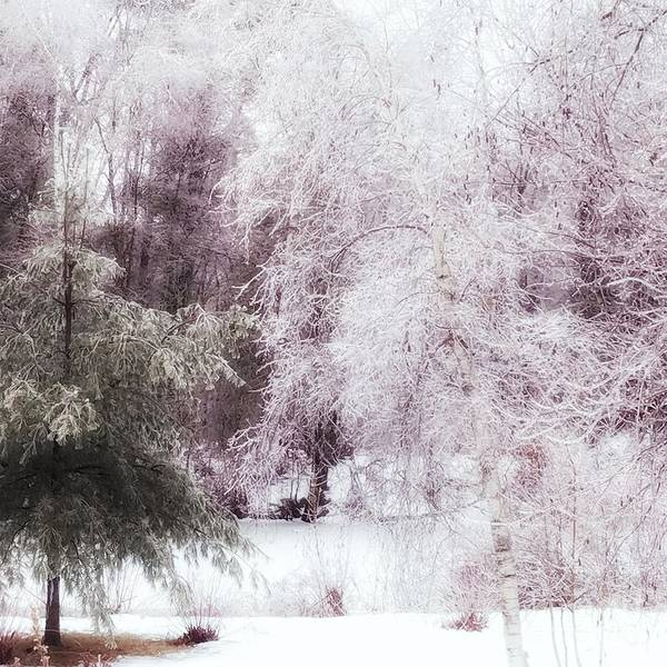 Photograph - The Ice Storm by Mary Capriole