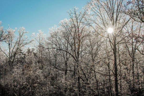 Photograph - The Ice Storm by Penny Lisowski