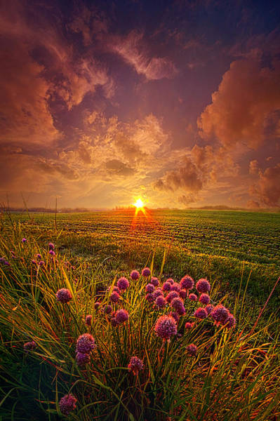 Photograph - The Infinite Space Between Words by Phil Koch