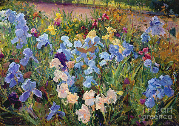 Iris Painting - The Iris Bed by Timothy Easton