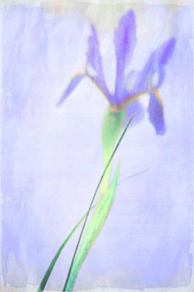 Photograph - The Iris by Theresa Tahara