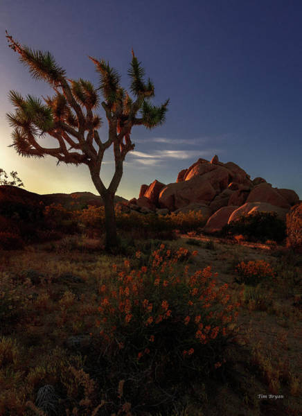 Photograph - The Joshua Tree by Tim Bryan