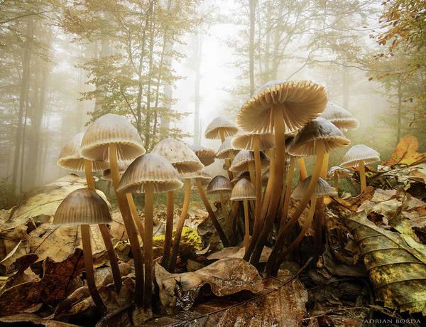 Shrooms Photograph - The Joy Of Life by Adrian Borda