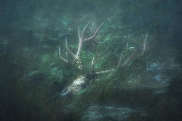 Deer Skull Digital Art - The King Of Regrets by Will Jacoby Artwork
