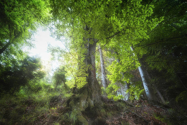 Wall Art - Photograph - The King Of The Forest by Adrian Malanca