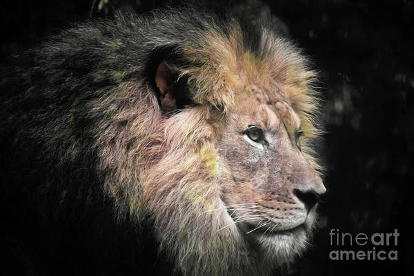 Photograph - King Of Beasts by Patti Whitten