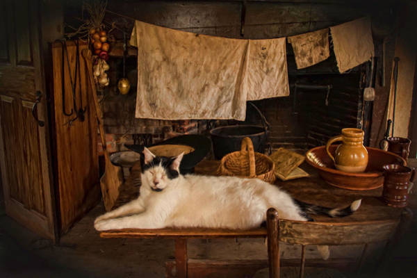 Photograph - The Kitchen Cat by Robin-Lee Vieira