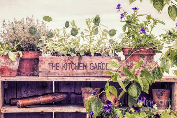 Nasturtiums Wall Art - Photograph - The Kitchen Garden by Tim Gainey
