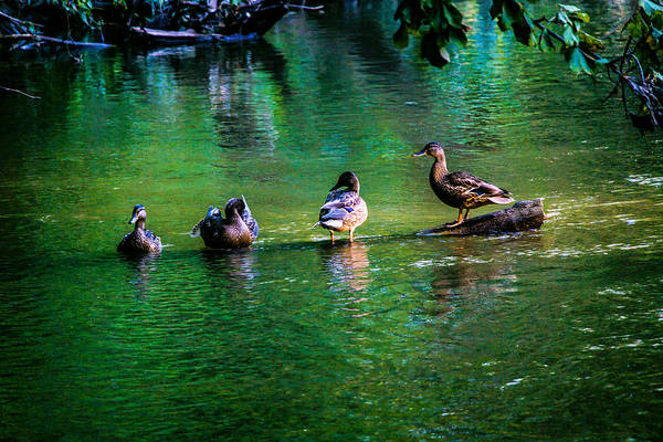 Duck Hunt Photograph - The Ladys by Kristin Hunt