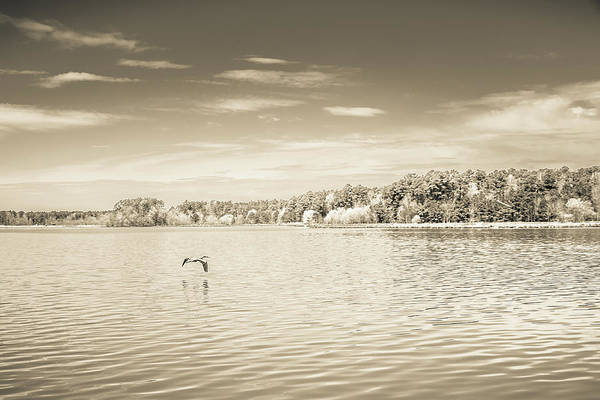 Photograph - The Lake #38 by Wade Brooks