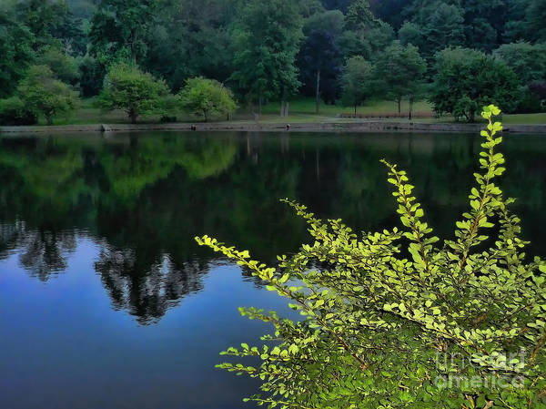 Photograph - The Lake by Jeff Breiman