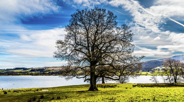 Pooley Bridge Wall Art - Photograph - The Lakeside Tree by Naylors Photography