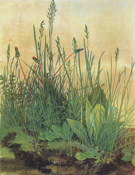 Master Piece Painting - The Large Piece Of Turf by Albrecht Durer